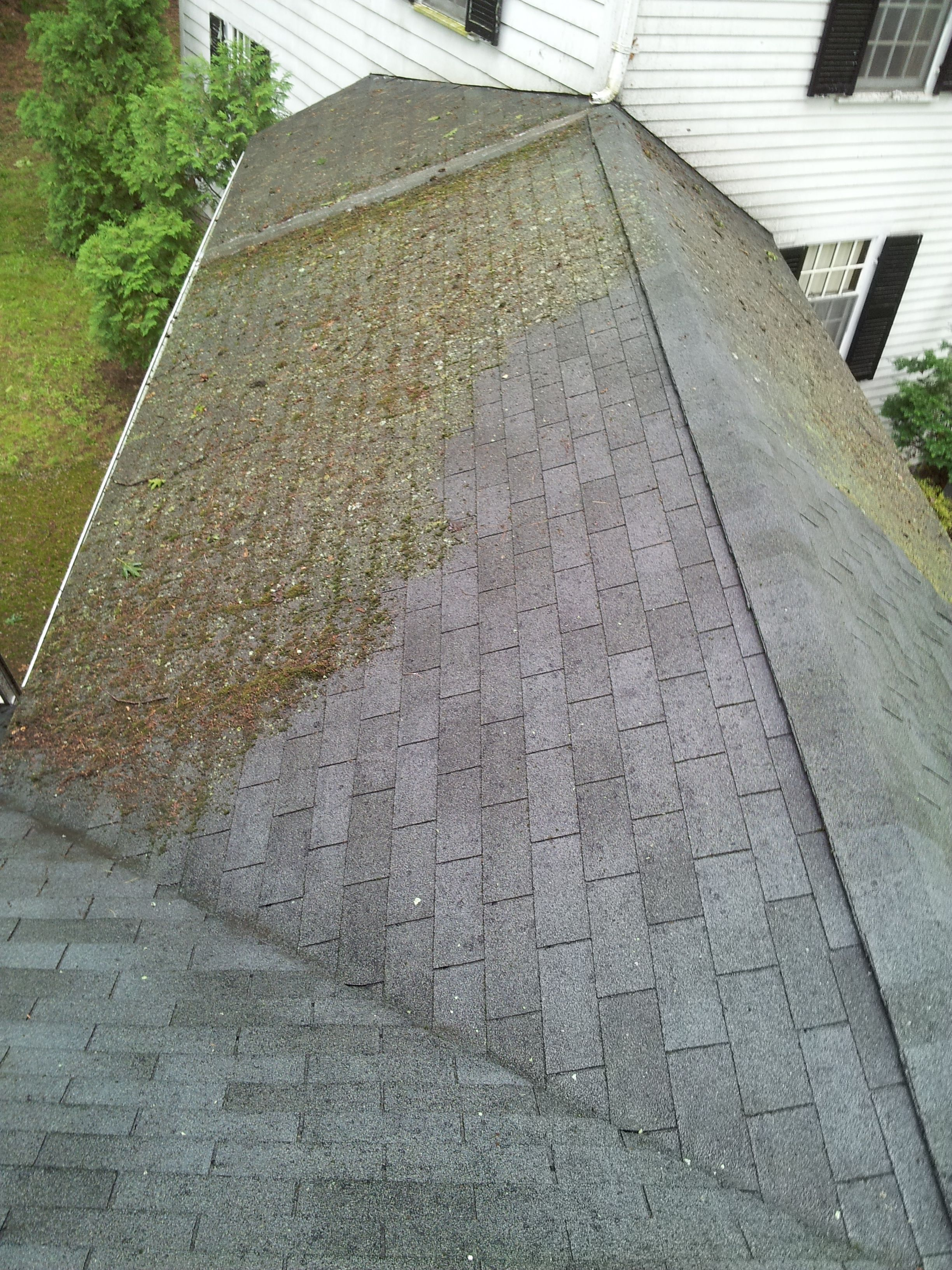 Learn About Roof Stains And Algae